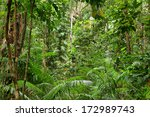 rainforest scenery in... | Shutterstock . vector #172989743
