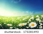 field of daisy flowers | Shutterstock . vector #173281493