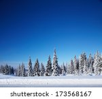 Winter Forest With Pine Trees...