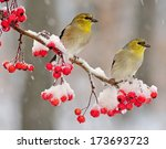 Two Winter American Goldfinche...