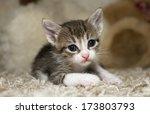 Stock photo cute kittens 173803793