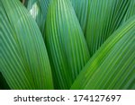 Palm Leaf  Palm Leaves Texture...