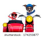 Motorbike Dogs Together In Lov...