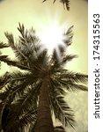 Sun Rays Through Palm Trees