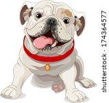 illustration of english bulldog ...