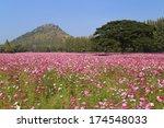beautiful cosmos flower in... | Shutterstock . vector #174548033