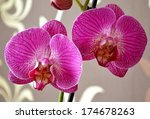 Detail Of Moth Orchid