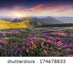 magic pink rhododendron flowers ... | Shutterstock . vector #174678833