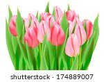 bunch of tulips isolated on...