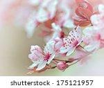 flowering   blooming fruit tree | Shutterstock . vector #175121957