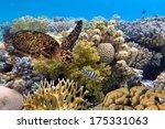 green turtle swimming in blue... | Shutterstock . vector #175331063