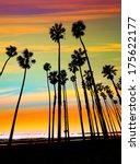 California Sunset Palm Tree...