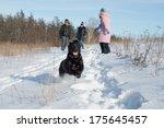 Labrador Dog Running On Snow...