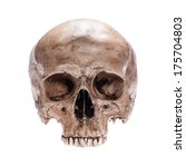 skull model without jaw bone on ... | Shutterstock . vector #175704803