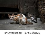 Vagrant Cats. Homeless Wild...