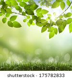 spring or summer season... | Shutterstock . vector #175782833