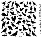birds set | Shutterstock .eps vector #176344367