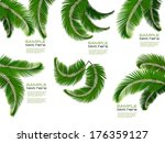 Set Of Palm Leaves On White...