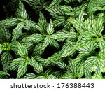 closeup detail of green and... | Shutterstock . vector #176388443