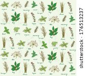 fresh herbs background vector | Shutterstock .eps vector #176513237