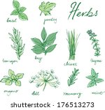 assorted fresh herbs vector  | Shutterstock .eps vector #176513273