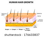 human hair growth | Shutterstock . vector #176633837