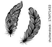 peerless decorative feather ... | Shutterstock . vector #176971433