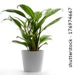 isolated houseplant on white ... | Shutterstock . vector #176974667
