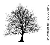 tree vector illustration. | Shutterstock .eps vector #177204047