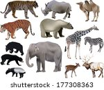 illustration with animals... | Shutterstock .eps vector #177308363