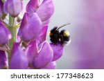 Photo Of A Bumblebee On The...