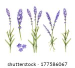 Lavender Flowers Collection....