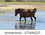 portrait of nice horse danube... | Shutterstock . vector #177696227