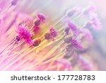 Blooming  Flowering  Thistle  ...