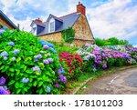 colorful hydrangeas flowers in... | Shutterstock . vector #178101203