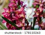 pink orchids | Shutterstock . vector #178110263