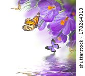 Stock photo spring crocuses with butterfly floral background 178264313