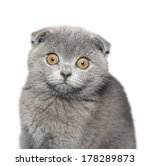 Stock photo cat isolated on white background 178289873