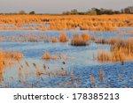 evening at neusiedler see ...   Shutterstock . vector #178385213