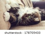 Cute Cat On The Sofa In Retro...