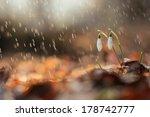 Flowers Under The Sweet Rain ...