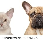 Stock photo cat and dog half of muzzle close up portrait isolated on white background 178761077