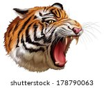 Illustration of a head of a roaring tiger on a white background - stock vector