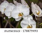 white orchids | Shutterstock . vector #178879493