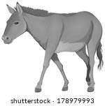 Illustration of a grey donkey on a white background - stock vector