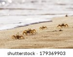 Crabs On Sand Beach