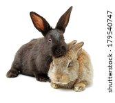 Stock photo rabbit on a white background 179540747