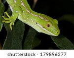 portrait of a lizard on a leaf... | Shutterstock . vector #179896277