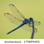 Blue Dragonfly Seen From The...