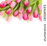 Fresh Pink Tulips On White...